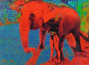 Timothy Bullard's manipulated photograph of elephant.
